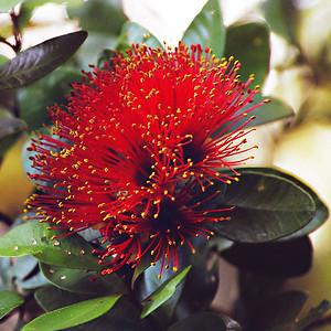 New Zealand Native Flora