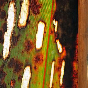 "TFN Flaxleaf 005.jpg Flax Leaf abstract 0 x 10.8 x10.8cm/4x4"" in stock 0 x 15 x15cm/6""x6"" in stock"