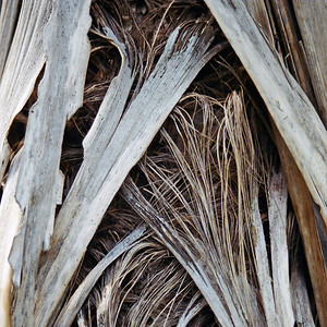 "TFN Cabtree 100.jpg Wind Weave - cabbage tree trunk leaves woven by the wind. 0 x 10.8 x10.8cm/4x4"" in stock 0 x 15 x15cm/6""x6""   in stock"