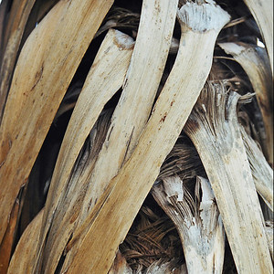 "TFN Cabtree 101.jpg Wind Weave - cabbage tree trunk leaves woven by the wind. 0 x 10.8 x10.8cm/4x4"" in stock 0 x 15 x15cm/6""x6""   in stock"