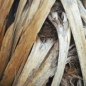 "TFN Cabtree 102.jpg Wind Weave - cabbage tree trunk leaves woven by the wind. 0 x 10.8 x10.8cm/4x4"" in stock 0 x 15 x15cm/6""x6""   in stock"