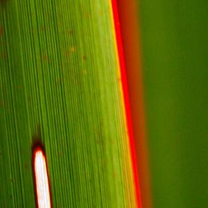 "TFN Flaxleaf 006.jpg Flax Leaf abstract 0 x 10.8 x10.8cm/4x4"" in stock 0 x 15 x15cm/6""x6"" in stock"