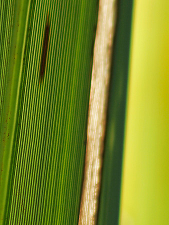 "TFN flaxleaf 007.5.jpg Flax Leaf abstract 0 15x20cm/6x8"" in stock"