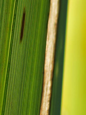 """TFN flaxleaf 007.5.jpg Flax Leaf abstract 0 15x20cm/6x8"""" in stock"""