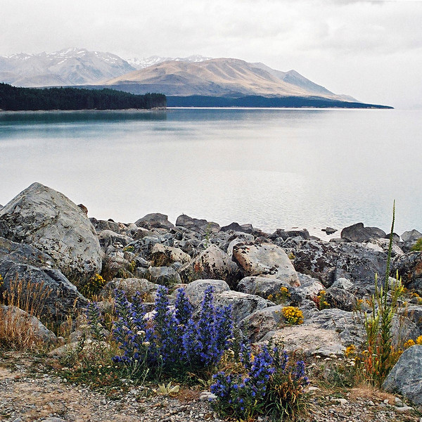 "TSS LakePukaki 002.jpg<br /> 0 10.8x10.8cm/4x4"" in stock<br /> 1 15x15cm/6x6"" in stock<br /> South Island New Zealand"