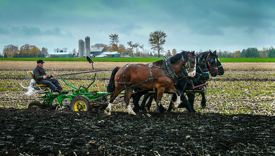 A Mennonite farmer ploughing his fields in Ontario.