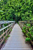 Bridge To Bamboo Forest