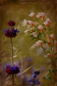 Chia and Pink Flowers Textures by Kim Klassen