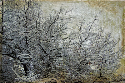 Snowy Tree Branches Textures by Kim Klassen