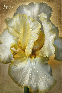 Iris textures by Kim Klassen: Nature's Beauty & Serendipity