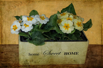 Home Sweet Home Textures by Kim Klassen