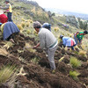 Locals digging potato crops, Huancayo, Peru. Credit: New Zealand Ministry of Foreign Affairs and Trade
