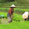 Local women working in the rice fields, Lao PDR. Credit: New Zealand Ministry of Foreign Affairs and Trade
