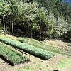 Reforestation project in Namche, Nepal. Credit: New Zealand Ministry of Foreign Affairs and Trade