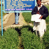 ADAF agricultural project - Wheat planting, Pakistan. Credit: New Zealand Ministry of Foreign Affairs and Trade