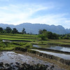 Agricultural fields on Jaco Island, Timor-leste, 2009. Credit: New Zealand Ministry of Foreign Affairs and Trade