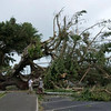 Huge trees uprooted by Cyclone Evan in Apia, Samoa, Dec 2012. Credit New Zealand Ministry of Foreign Affairs and Trade