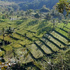 Terraced rice fields in Senaru, a traditional village in Gunung Rinjani National Park, Lombok, Indonesia. Credit: New Zealand Ministry of Foreign Affairs and Trade