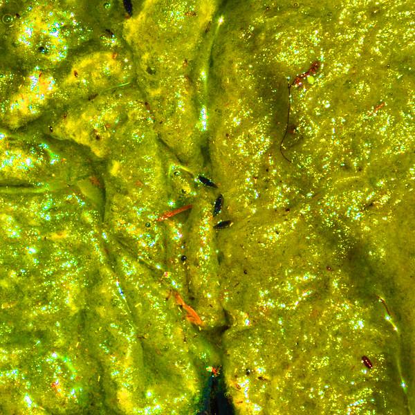 Algae in Marrakech~3304-4sq.