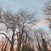 Trees in Highgate~10368-1.