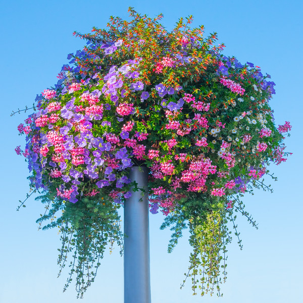 Flowers in Paimpol~9864-2sq.