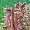 Trees in Crosskeys~0143-2sq.