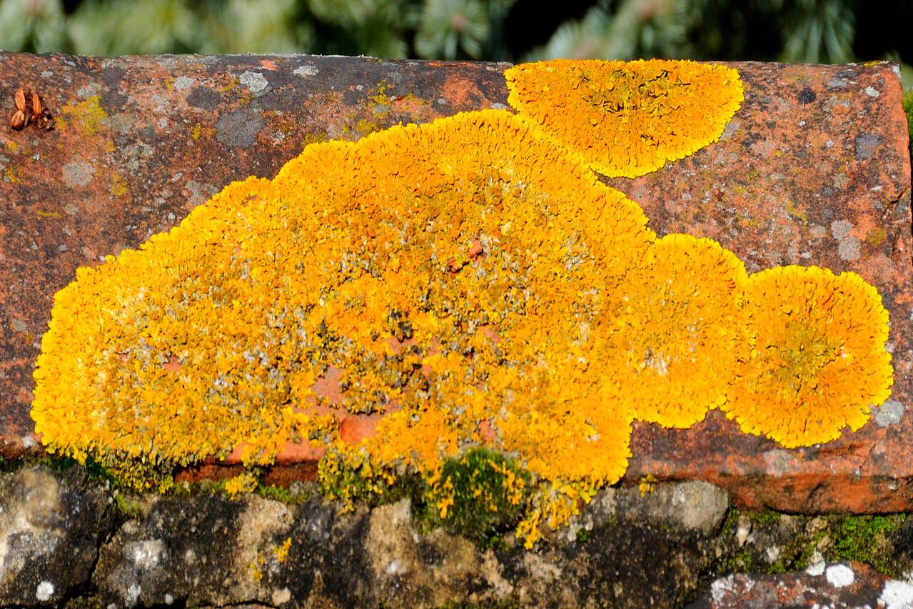 Aldbourne Lichen~4739-1.