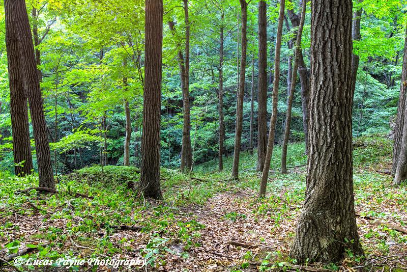 Bixby State Preserve near Edgewood in Northeast Iowa<br /> <br /> July 11, 2012