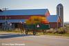 Amish farm in Iowa.<br /> October 4, 2008