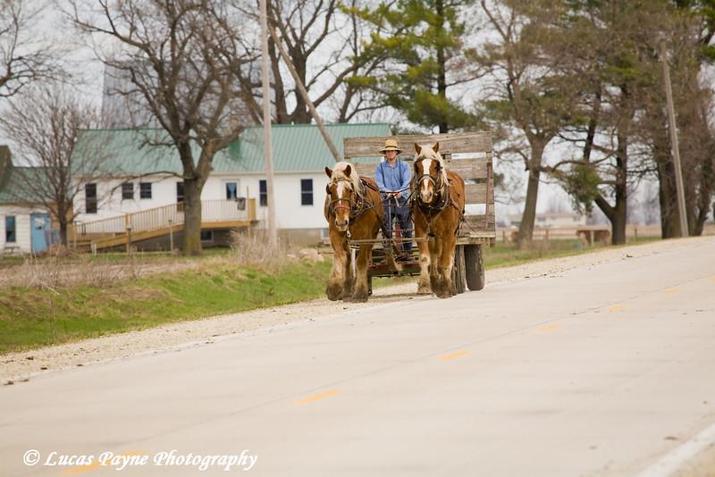 Amish horse and wagon near Hazelton, Iowa.<br /> April 10, 2010