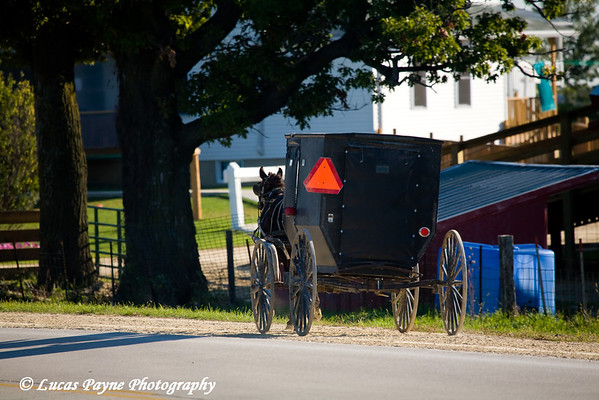 Amish horse and buggy in Iowa.<br /> October 4, 2008