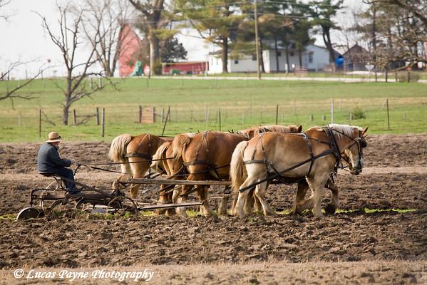Amish man plowing a field near Hazelton, Iowa.<br /> April 10, 2010