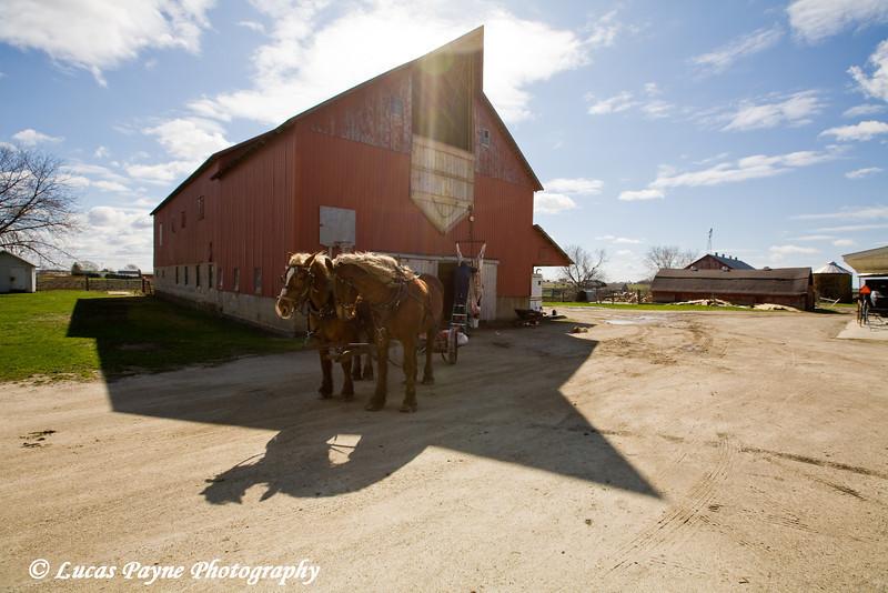 Amish farm near Hazelton, Iowa.<br /> April 08, 2010