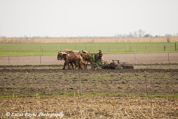 Amish boy plowing a field near Hazelton, Iowa.<br /> April 10, 2010