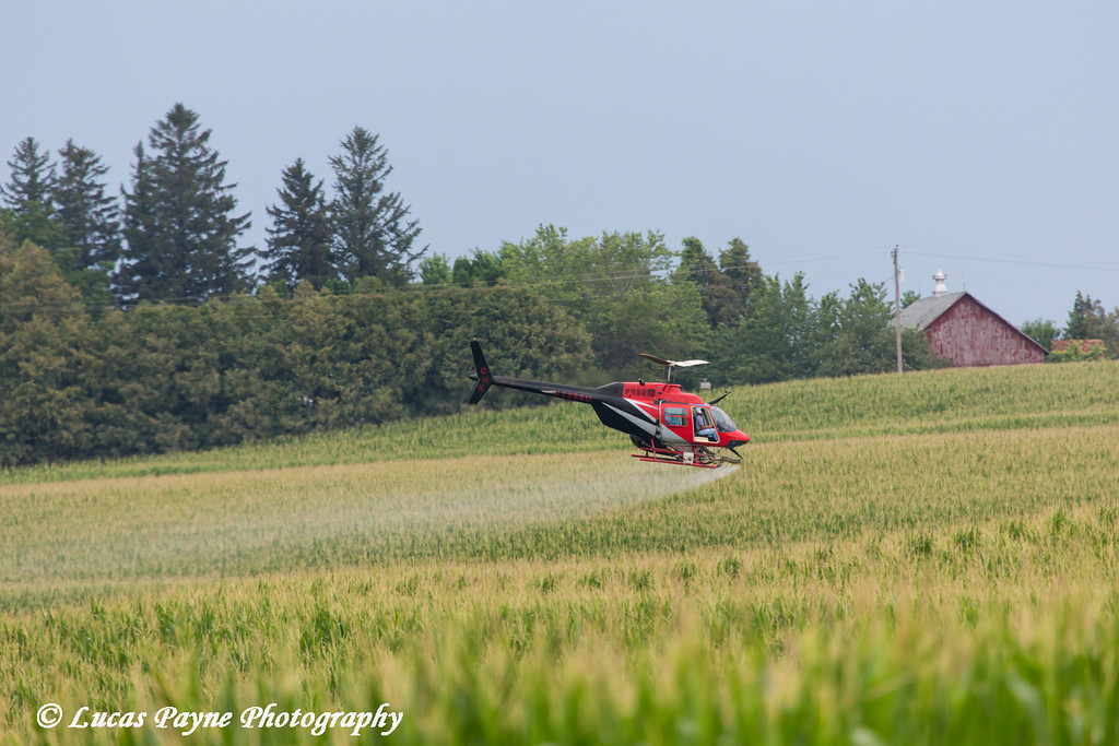 Crop dusting helicopter spraying a corn field in Northeast Iowa<br /> <br /> July 12, 2012
