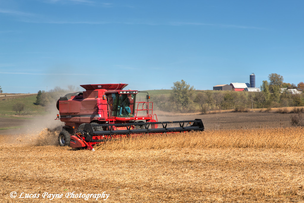 Red combine harvesting beans on a sunny autumn day in Northeast Iowa.<br /> <br /> October 27, 2013