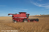Red combine harvesting beans on a sunny autumn day in Northeast Iowa. <br /> <br /> October 27, 2013