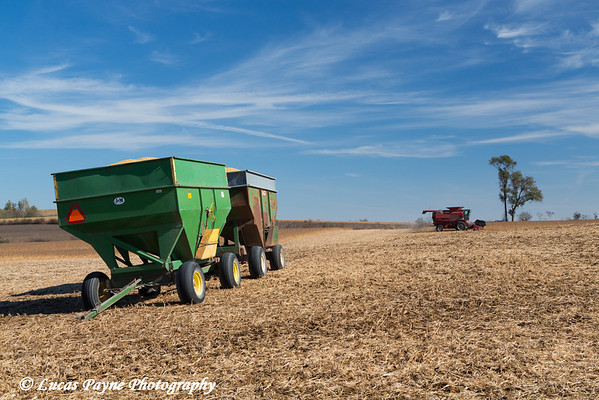 Two loaded wagons and a red combine harvesting beans on a sunny autumn day in Northeast Iowa. <br /> <br /> October 27, 2013