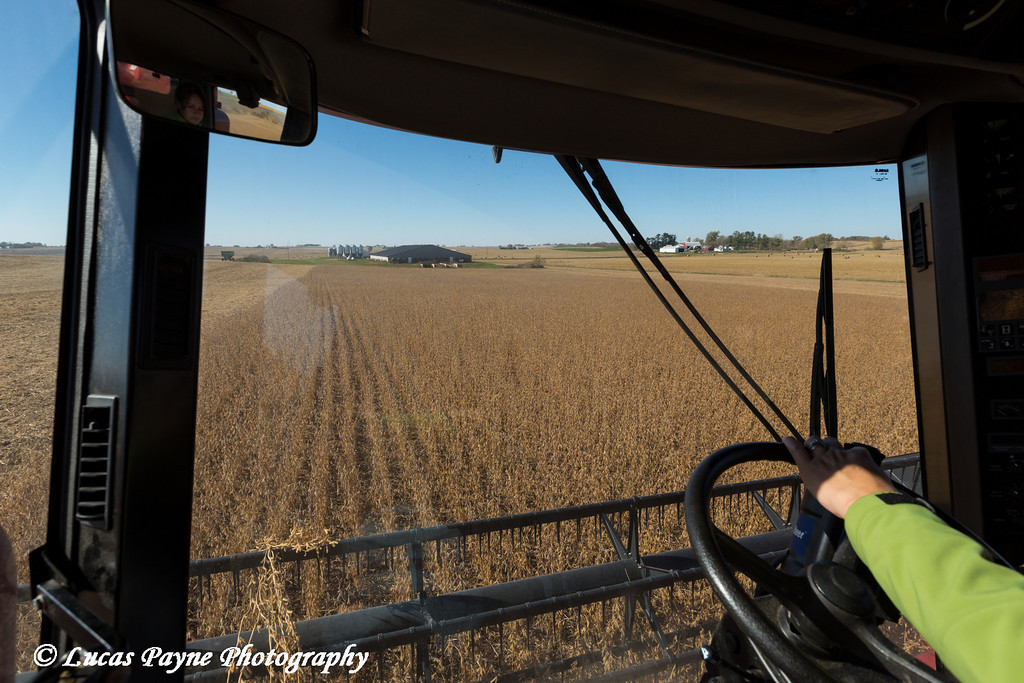 View from the interior of a combine harvesting beans in Northeast Iowa. <br /> <br /> October 27, 2013