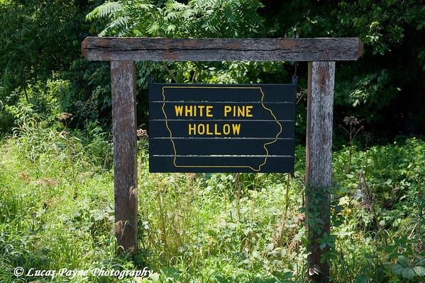 White Pine Hollow Nature Preserve near Colesburg, Iowa<br /> July 27, 2008