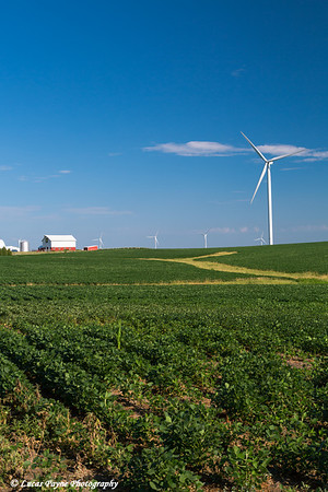Wind turbines from the Elk Wind Energy Farm and a bean field with a barn in the distance near Edgewood in Northeast Iowa<br /> <br /> July 08, 2012