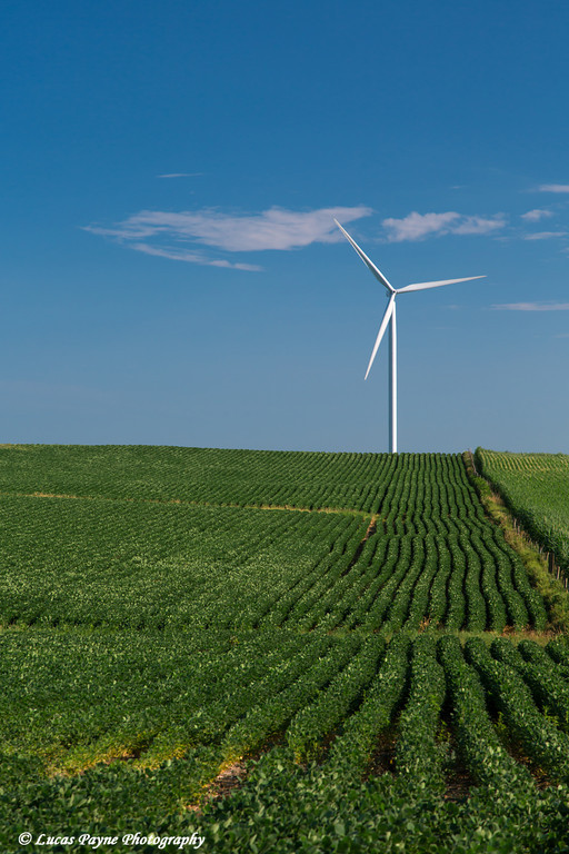 Wind turbines from the Elk Wind Energy Farm and a bean field near Edgewood in Northeast Iowa<br /> <br /> July 08, 2012