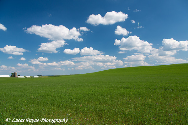 Scenic view of an alfalfa field on a sunny day in Northeast Iowa<br /> <br /> <br /> July 11, 2012