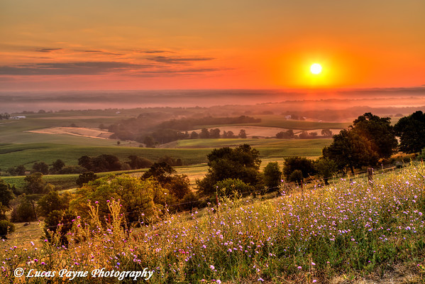 Scenic view of the Mississippi River Valley and flowers along the Great River Road near Balltown at sunrise, Northeast Iowa<br /> <br /> July 11, 2012