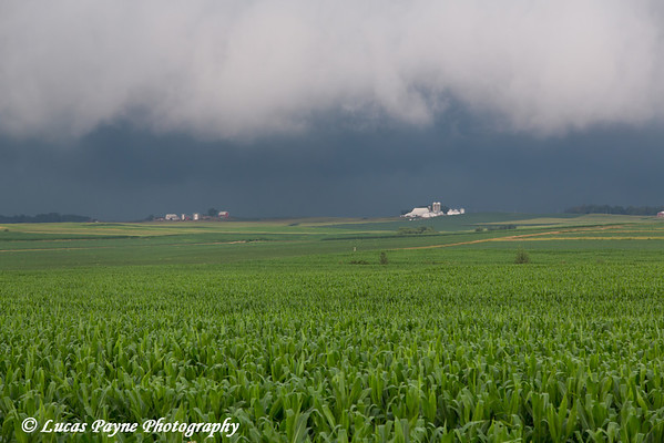 An approaching storm over a corn field near Strawberry Point, Northeast Iowa<br /> <br /> July 13, 2012