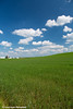 Scenic view of an alfalfa field on a sunny day in Northeast Iowa<br /> <br /> July 11, 2012
