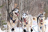John Beargrease Sled Dog Marathon 2008 in Minnesota 32°F