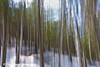 Vertical pan of trees at Tettegouche State Park along the North Shore of Lake Superior in Minnesota.