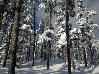 snow-covered pines on the Continental Divide