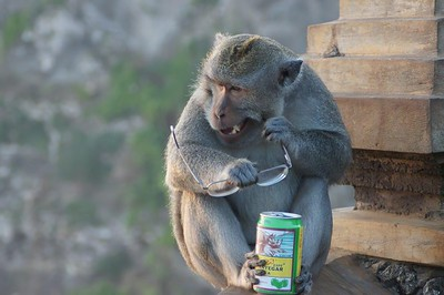 Monkey See.... Monkey Eat